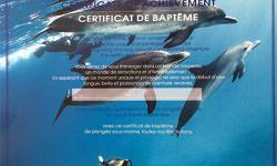 Certificat de baptême de plongée chez Isula Plongée